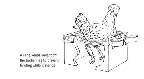 chickensling
